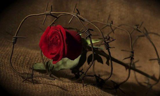 Степан Процюк. Троянда ритуального болю. Рецензія